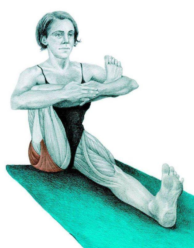 Анатомия стретчинга в картинках: упражнения для всего тела
