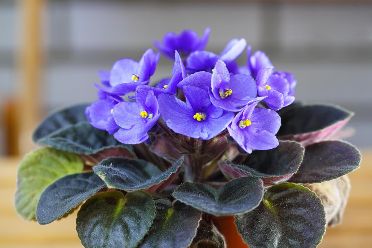 11 натуральных удобрений для домашних цветов, советы цветоводов