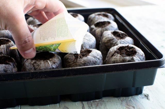 Взойдет все! Как добиться стопроцентной всхожести семян – раскрываем секреты опытных дачников