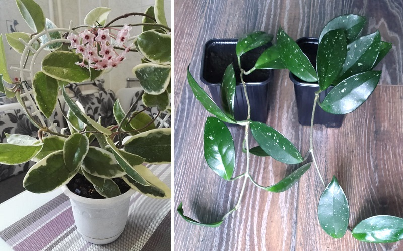 Какие домашние растения лучше всего подходят для занятой хозяйки
