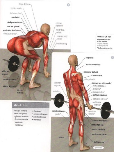 Выполняйте упражнения для спины, ведь это так Важно!