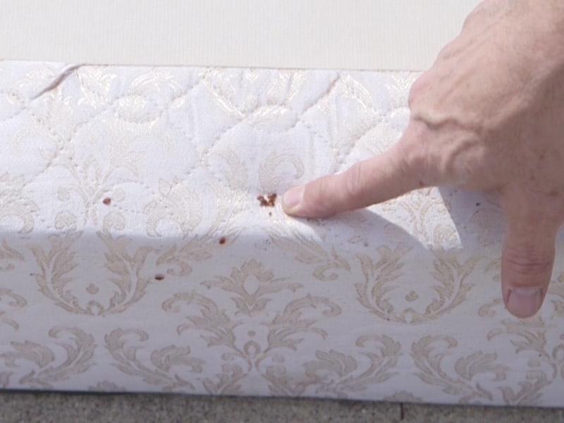 Как легко избавиться от паразитов и постельных клопов в спальном матрасе!