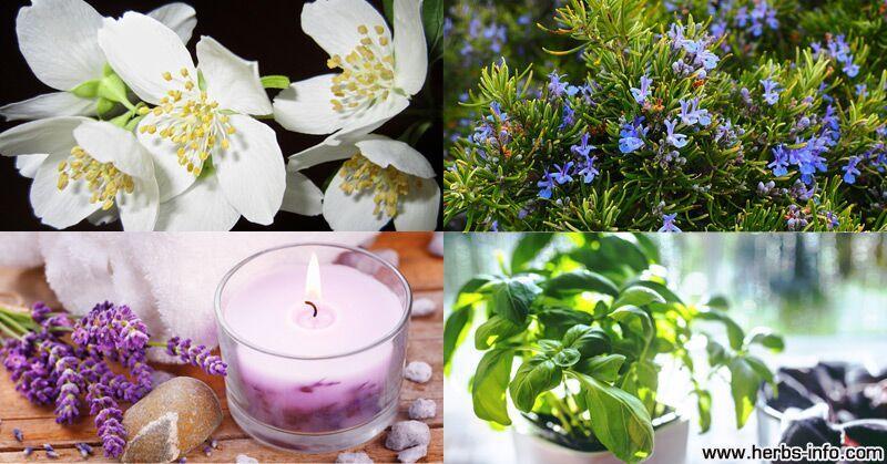 8 растений, которые помогут очистить воздух в вашем доме!