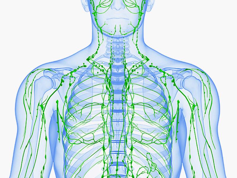 Как улучшить работу лимфатической системы